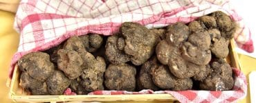La truffe fait sa fête à Saint Geniès des Mourgues