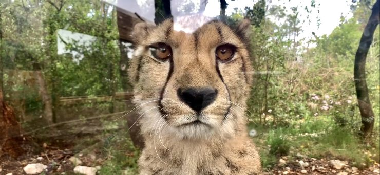 Montpellier : une pétition pour sauver le zoo du Lunaret