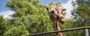 Le Zoo de Montpellier repart en Live !