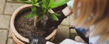 Montpellier la Ville va offrir des arbres fruitiers aux propriétaires