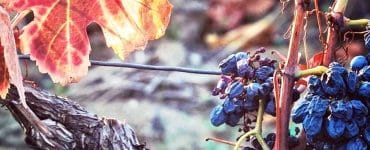 Des coffrets cadeaux à La Maison des Vins du Languedoc