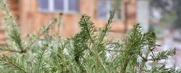 Montpellier : 46 parcs pour recycler ton sapin