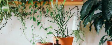 Montpellier des centaines de plantes en vente à partir de 1€