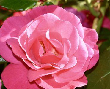 Top 6 des fleuristes de Montpellier