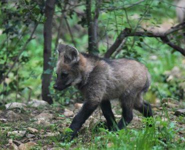 Les portes du zoo s'ouvriront le 19 mai - copyright Zoo de Montpellier