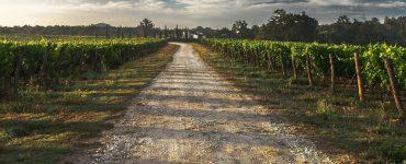 Balade vigneronne en Salagou