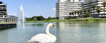 Montpellier : encore du 34° pour ton début de semaine